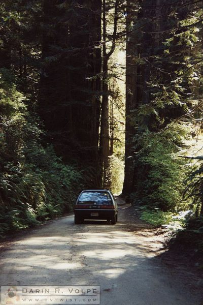 Redwoods, Northern California 1990