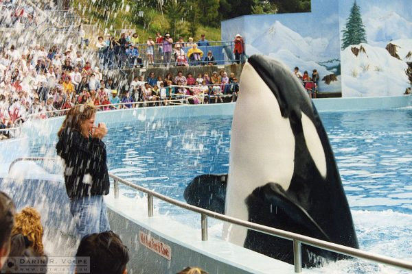 """Shamu"" at Seaworld Vallejo - 1992"