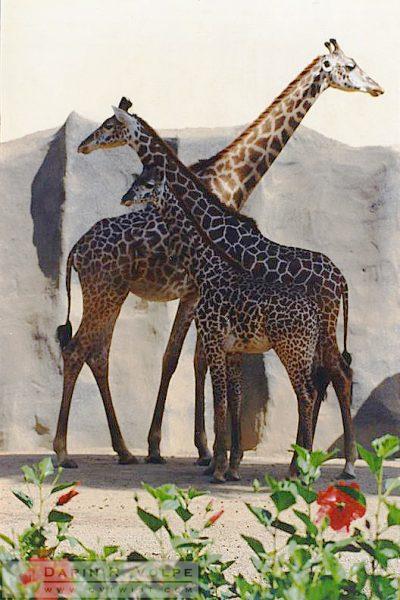 San Diego Zoo - 1992