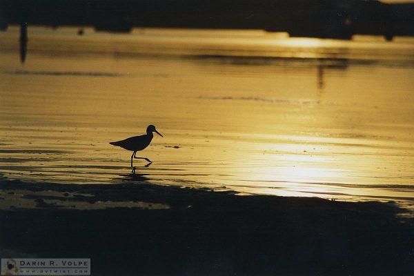 Los Osos, California - 1992