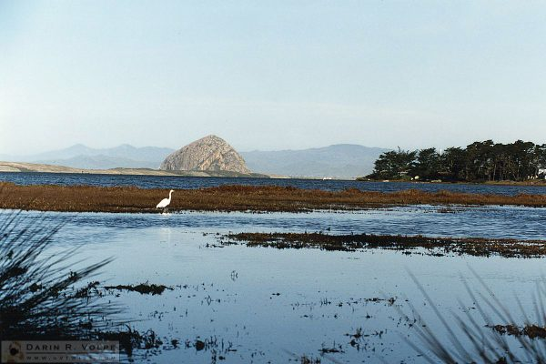 Morro Bay from Sweet Springs - Los Osos - 1993