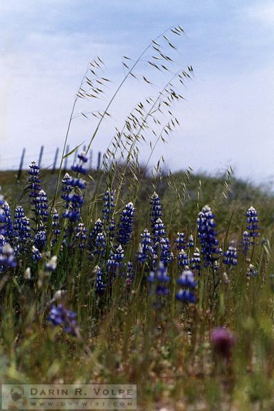 San Luis Obispo County - 1993