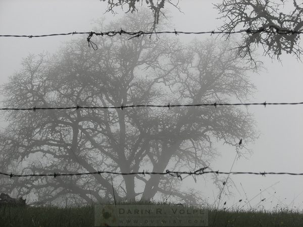 """The Mist"" [Oak Tree Behind Barbed Wire On Mt. Hamilton, California]"