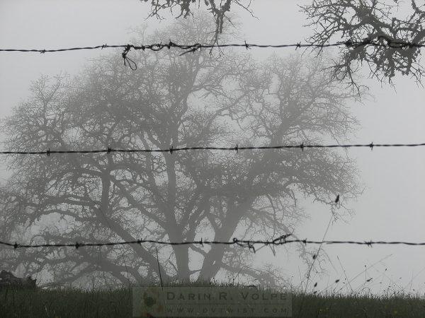 """The Mist"" [Oak Tree Behind Barbed Wire On Mt. Hamilton, California]"