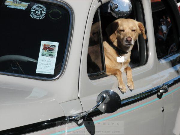 """Doggie in the Window"""