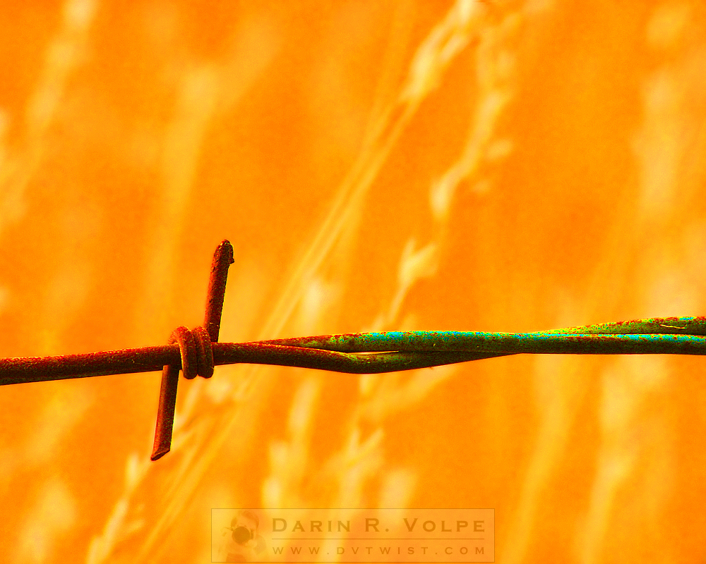 """Devil's Rope"" [Barbed Wire Fence In Atascadero, Califorinia]"