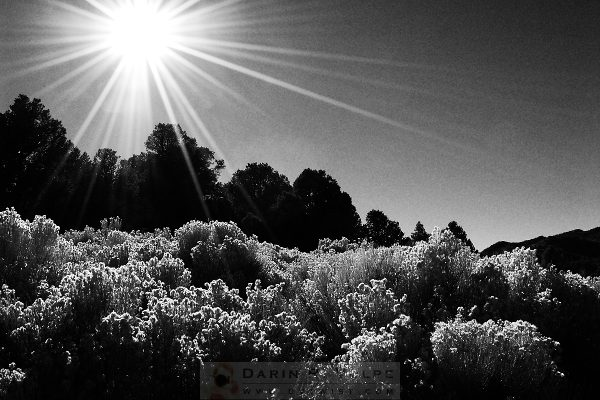 """""""Sunlight"""" [Wildflowers At Death Valley National Park, California]"""