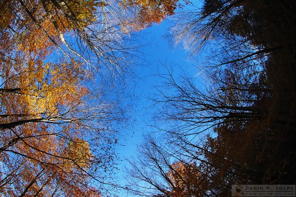 """Reach for the Sky"" [Sky View from a Forest Path in Vermont]"