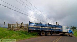 Unloading the cattle truck in Costa Rica.