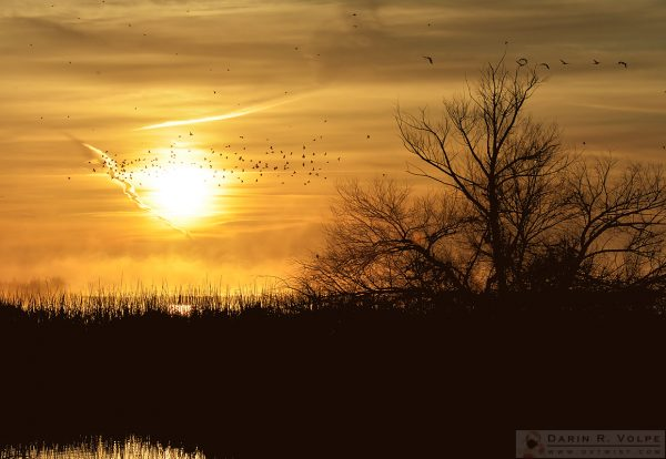 """Morning in Merced"" [Sunrise at Merced National Wildlife Refuge, California]"