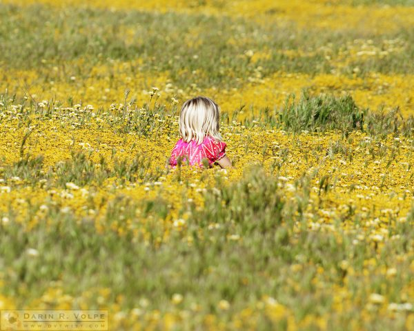 """Growing Like a Weed"" [Girl Sitting in Wildflower Field in Santa Margarita, California]"