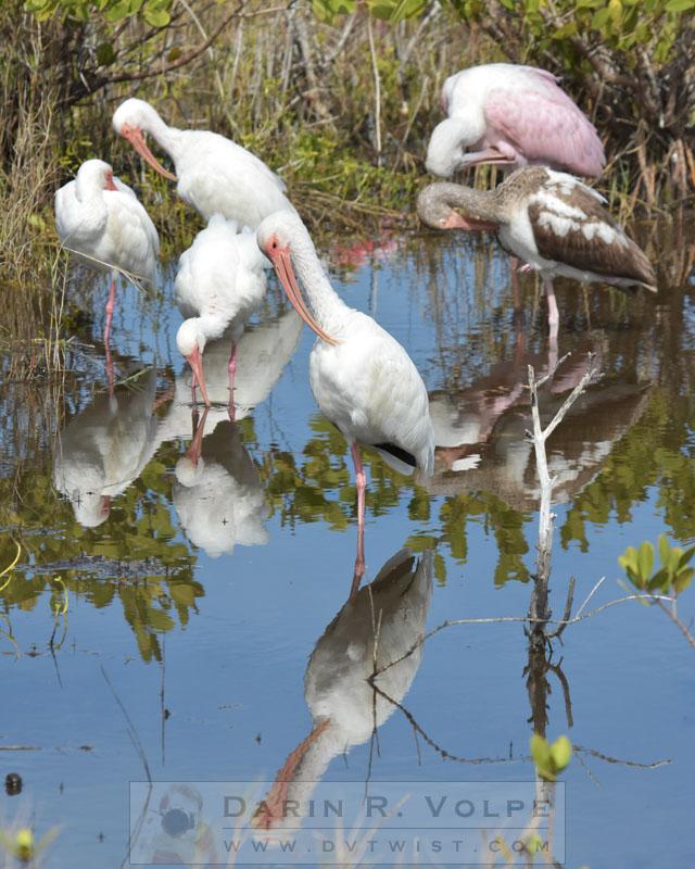 Merritt Island Birds
