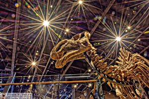 """Dinosaur Under the Stars"" [Natural History Museum of Utah]"