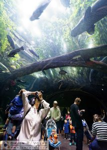 Amazon Flooded Forest, California Academy of Sciences - San Francisco, California