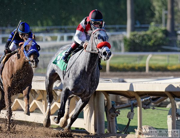 """Jockeying For Position"" [Horse Race At Santa Anita Park, California]"