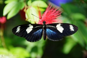 Technicolor [Key West Butterfly and Nature Conservatory, Florida]