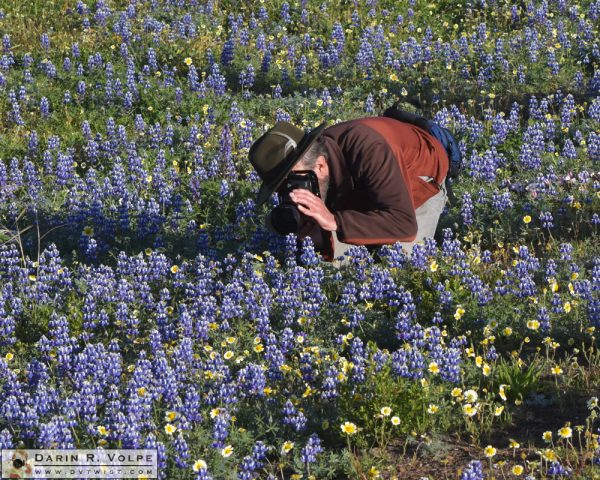 A photographer in a field of flowers near San Simeon, California