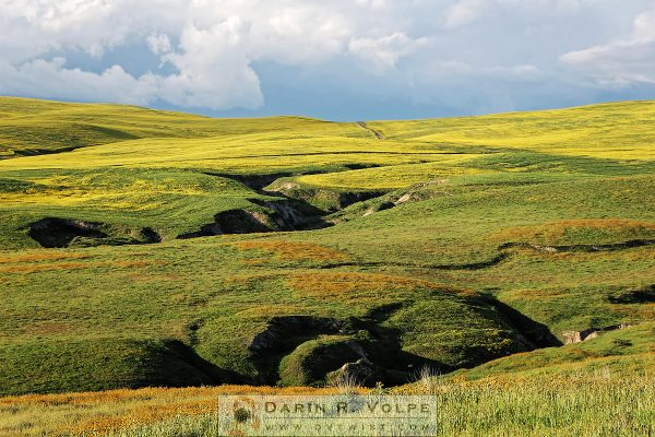 """Wildflowers And Crevasses"" [San Luis Obispo County]"