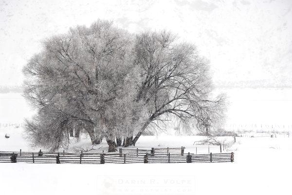"""""""Winter In The Rockies"""" [Western Colorado]"""